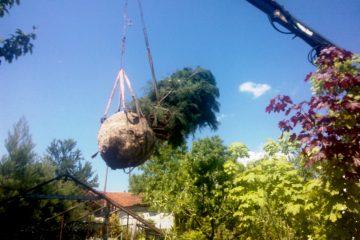 Едроразмерни дървета